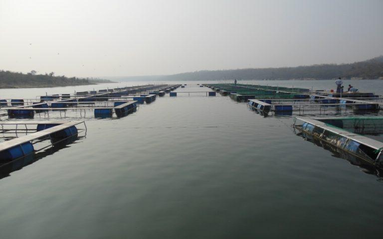Aquaculture 2